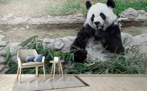 Papier peint panda avec bambou